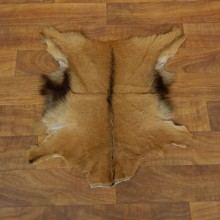 Goat Hide Taxidermy Tanned Skin For Sale #17884 @ The Taxidermy Store
