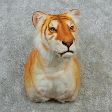 Reproduction Golden Bengal Tiger Taxidermy Shoulder Mount For Sale