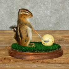 Golfing Squirrel Novelty Mount For Sale #16116 @ The Taxidermy Store