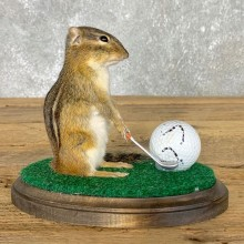 Golfing Squirrel Novelty Mount For Sale #22621 @ The Taxidermy Store