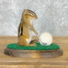 Golfing Squirrel Novelty Mount For Sale #22626 @ The Taxidermy Store