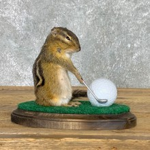 Golfing Squirrel Novelty Mount For Sale #22630 @ The Taxidermy Store