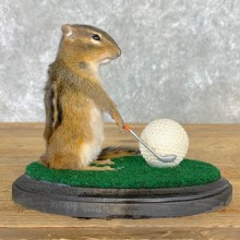 Golfing Squirrel Novelty Mount For Sale #22632 @ The Taxidermy Store
