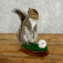 Golfing Squirrel Novelty Taxidermy Mount For Sale