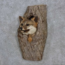 Gray Fox in a Log Head Mount For Sale #15228 @ The Taxidermy Store