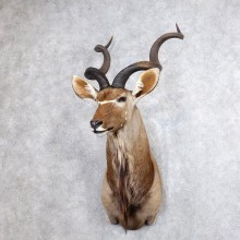 Greater Kudu Taxidermy Shoulder Mount For Sale
