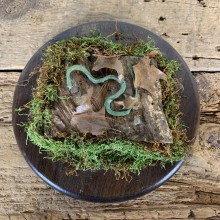 Green Snake Taxidermy Mount For Sale #21540 @ The Taxidermy Store