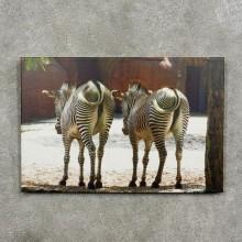 #17091Grevy's Zebra Photography Scene