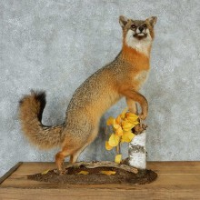 Standing Gray Fox Mount