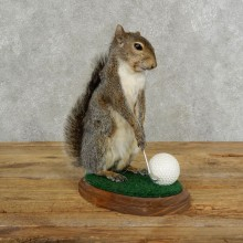 Golfing Squirrel Novelty 17109 @Taxidermy Mount For Sale