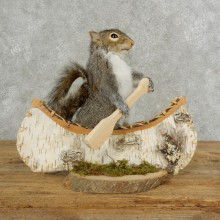 Canoe Squirrel Novelty Mount For Sale #17106 @ The Taxidermy Store