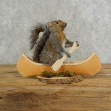 Canoe Squirrel Novelty Mount For Sale #17108 @ The Taxidermy Store