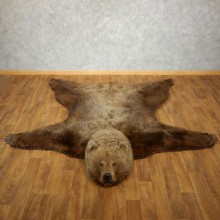 Grizzly Bear Full Size Taxidermy Rug Mount For Sale