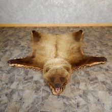 Grizzly Bear Taxidermy Rug Mount For Sale #19261 @ The Taxidermy Store