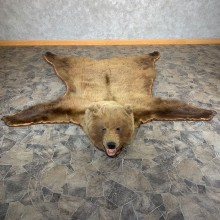 Grizzly Bear Taxidermy Rug Mount For Sale #21182 @ The Taxidermy Store