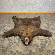 Grizzly Bear Full-Size Taxidermy Rug Mount For Sale