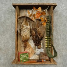Ruffed Grouse Display Bird Mount For Sale #16678 @ The Taxidermy Store