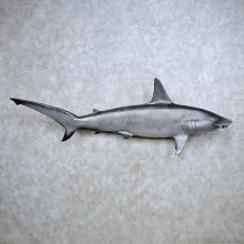 Hammerhead Shark Replica Fish Mount For Sale #14365 @ The Taxidermy Store