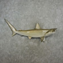Hammerhead Shark Reproduction Taxidermy Mount For Sale