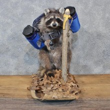 Novelty Hiking / Backpacking Raccoon Mount #10675 For Sale @ The Taxidermy Store