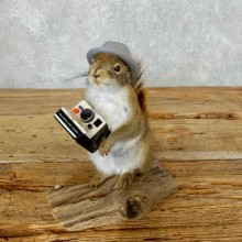Hipster Squirrel Novelty Taxidermy Mount For Sale