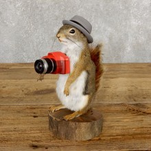 Hipster Squirrel Novelty Mount For Sale #18902 @ The Taxidermy Store