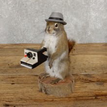 Hipster Squirrel Novelty Mount For Sale #18903 @ The Taxidermy Store