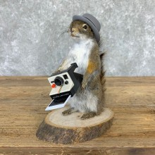 Hipster Squirrel Novelty Mount For Sale #23002 @ The Taxidermy Store