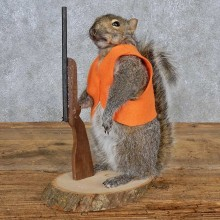 Hunting Grey Squirrel Taxidermy Mount For Sale