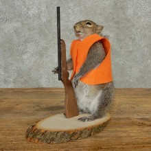 Hunting Squirrel Novelty Taxidermy Mount For Sale