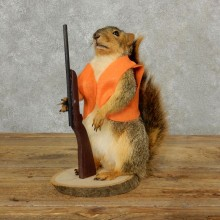 Hunting Squirrel Novelty Mount For Sale #17094 @ The Taxidermy Store