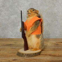Hunting Fox Squirrel Novelty Taxidermy Mount For Sale