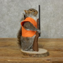 Hunting Squirrel Novelty Mount For Sale #17099 @ The Taxidermy Store