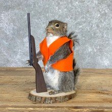 Hunting Squirrel Novelty Mount For Sale #22941 @ The Taxidermy Store