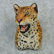 Jaguar Taxidermy Shoulder Mount #12920 For Sale @ The Taxidermy Store