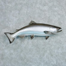 King Salmon Taxidermy Fish Mount #12796 For Sale @ The Taxidermy Store.jpg