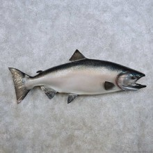 King Salmon Fish Mount For Sale #14367 @ The Taxidermy Store