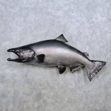 King Salmon Fish Mount For Sale #14368 @ The Taxidermy Store