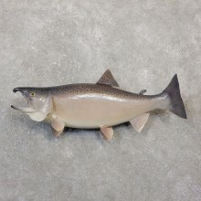King Salmon Fish Mount For Sale #20059 @ The Taxidermy Store