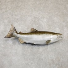 "41.375"" King (Chinook) Salmon Fish Mount For Sale"