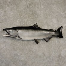 King Salmon Fish Mount For Sale #21602 @ The Taxidermy Store