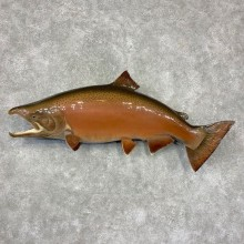 King Salmon Fish Mount For Sale #21610 @ The Taxidermy Store