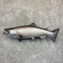 King Salmon Fish Mount For Sale #21623 @ The Taxidermy Store