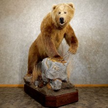 Giant Kodiak Brown Bear Life-size Taxidermy Mount For Sale