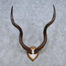 African Kudu Horn Plaque Taxidermy Mount For Sale #14498 @ The Taxidermy Store