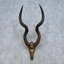 African Kudu Skull Horns Mount For Sale #13989 @ The Taxidermy Store
