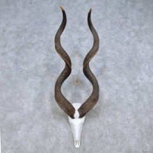 Kudu Skull Horn Taxidermy Mount For Sale #13999 @ The Taxidermy Store