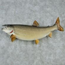 """38"""" Lake Trout Fish Mount"""