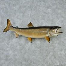 """42"""" Lake Trout Fish Mount"""
