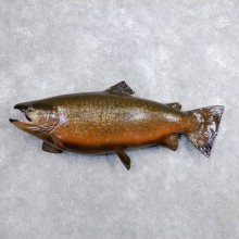 """37"""" Lake Trout Taxidermy Fish Mount For Sale"""